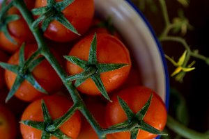 Branches of Cherry Tomatoes