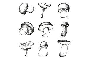 Mushroom vector set and patterns