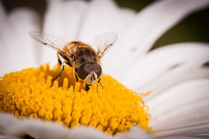 A bee meal