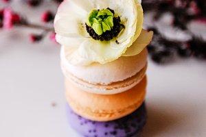 Vintage Macarons + Anenmone