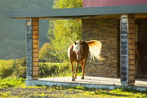 horse in chalet porch