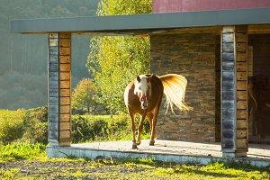 horse in chalet porch