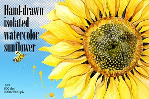 Watercolor hand-drawn sunflower