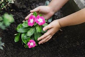 Children hands around green young flower plant