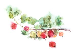 Red gooseberries watercolor image