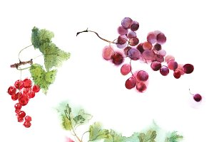 berries set watercolor image