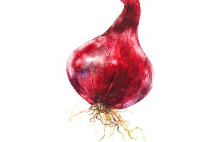 watercolor image of red onions