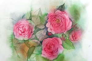 Watercolor roses painting