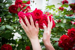 Female hand holding red roses