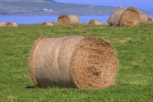 Hay bales on grass