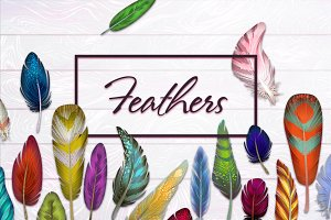 Feathers - from a contour to paints.