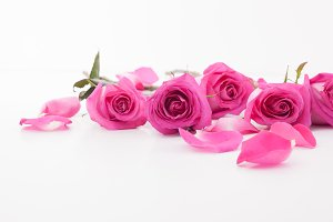 Pink roses and petals