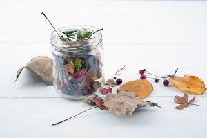 Dried leaves and red berries