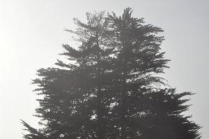 fog and backlight tree