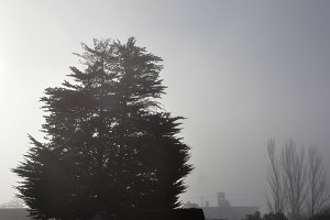fog background with trees