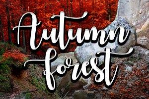 Deep moss forest in autumn.