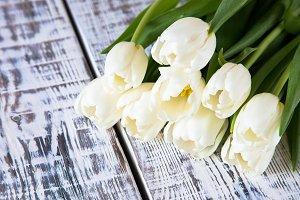 Fresh white tulips