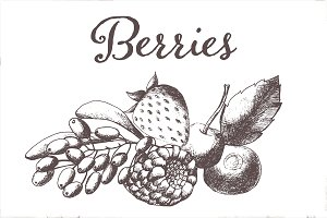 Hand drawn vectorized berries