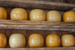 Gouda cheese in shop