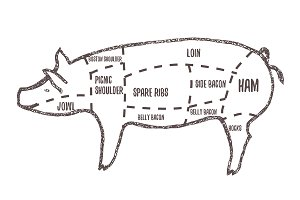 hand drawn vector pig butchers cuts