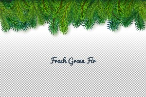 Green fir-tree border