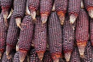Purple waxy corn