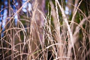 Grass #2
