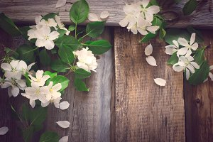 Spring vintage background with flowering branches of apple, tint