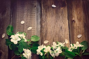 Flowers of apple on the wooden boards background, Tinted