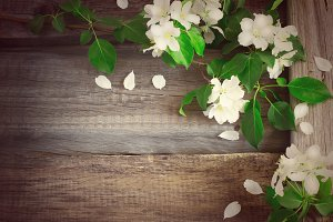Flowering branches of apple trees on rough wooden background, ti