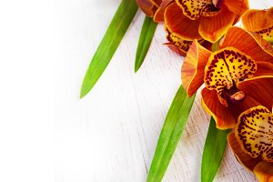 Golden brown orchid on a white vintage background.  Cymbidium