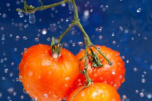 Fresh red tomato in the drops