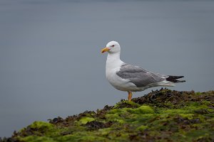 Seagull perched on the rocks