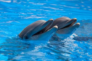 Funny dolphins in the pool