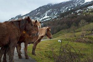 High Mountain Horses