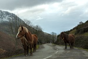 Horses in Mountain Road
