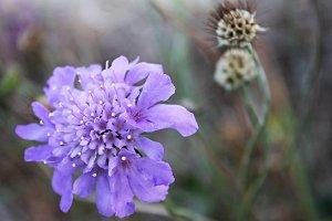 Soft Purple Flower