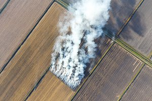 The burning of rice straw in the fields. Smoke from the burning of rice straw in checks. Fire on the field