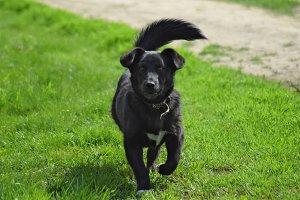 Black dog on the green grass