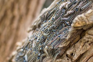 Caterpillar swarm
