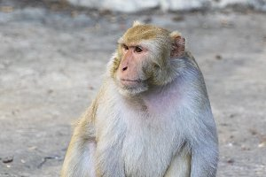 Image of monkey sitting.