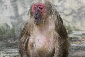 Image of a monkey.