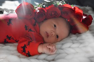 Cute newborn baby sleeps in roses