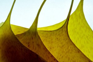 yellow with abstract shapes