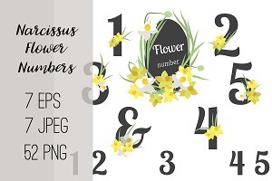 №222 Narcissus Flower Numbers