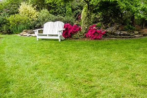 Garden with green lawn