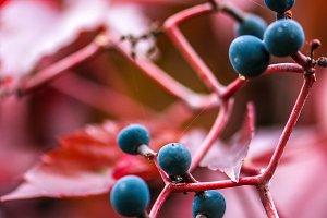 Automn fruits