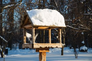 Feeders for birds in the park in winter on a clear day