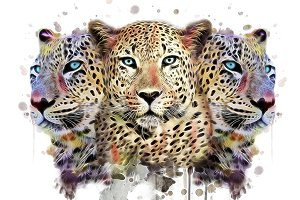 Leopard illustration/Animal print