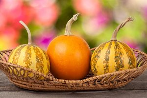 Orange and striped decorative pumpkins on a wooden table in  wicker basket with blurred garden background